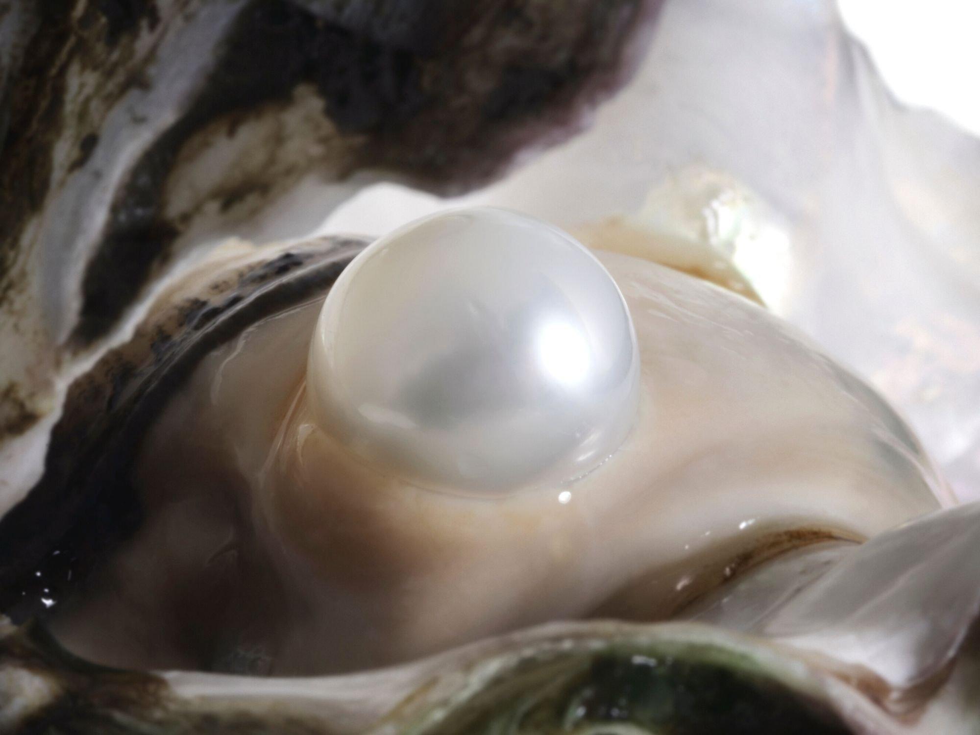 Pearl Farming And Harvesting | Diamond Buzz