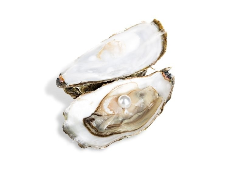 Pearl Farming And Harvesting